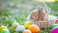Easter car rental from ProRent a car